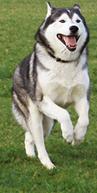dog-b-l